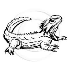 Small Picture Tuatara free coloring pages Tuatara Pinterest