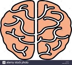 Human brain isolated stock vector