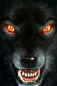 Come Play With Me Vlk Vlkodlaci Zvířata A Tetování Vlka