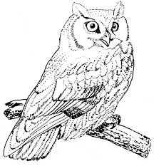Screech Owl Coloring Page Animals Town Free Screech Owl Color Sheet