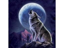 волк на луну воет тату а вы знаете почему волки воют на луну