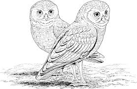 Bird Hard Coloring Pages For Kids With Barn Owl Difficult Coloring