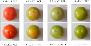 Tomato Color Chart Effect Of 1 Octylcyclopropene On Physiological Responses And