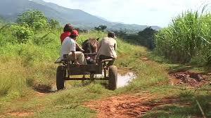 Risultati immagini per campo cubano