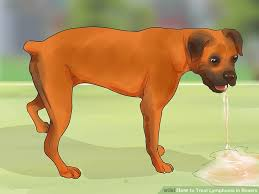 Canine Lymphoma Symptoms How To Treat Lymphoma In Boxers With Pictures Wikihow