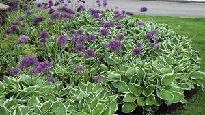 10 cool hosta garden ideas with