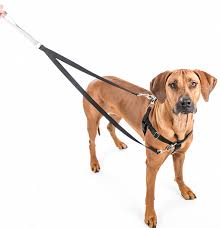 2 Hounds Harness Size Chart Freedom No Pull Dog Harness Leash Training Package