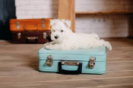 Traveling Across State Lines With Pets Petplan