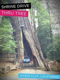 all photos 1 shrine drive thru tree