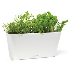 hydroponic herb garden.  Herb Aquaphoric Herb Garden Tub  Self Watering Passive Hydroponic Planter   Fiber Soil Keeps Indoor For O