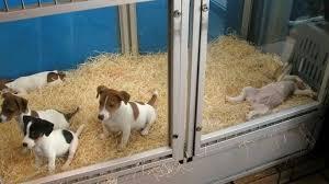 Image result for pet shop