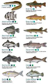 Fish Identification Maryland Fishing Regulations 2019