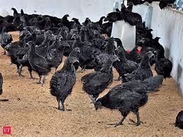 Chicken Breed Chart Pdf Black Chicken Bone Of Contention Madhya Pradesh