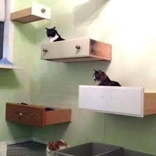floating cat wall shelves shelving curved glass it s building floating cat shelves