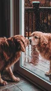 Cute Dogs Wallpaper ...