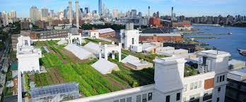 the history of rooftop gardens