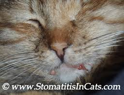 cats breath stinks. Delighful Cats For Cats Breath Stinks