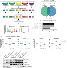 Figures And Data In Changes In Mrna Abundance Drive