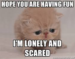 Hope you are having fun I'm lonely and scared - Super Sad Cat ... via Relatably.com