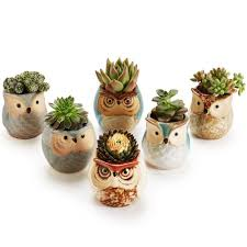 Succulent Pot Design Succulent Pots Owl Ceramic Design Regulustlk