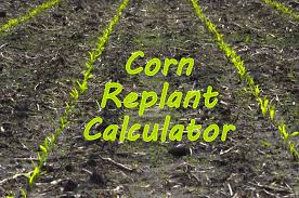 New Mobile Corn Replant Decision Aid The Bulletin Pest