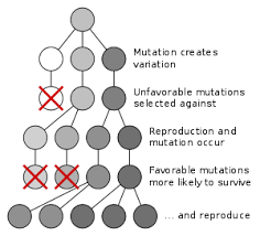 microevolution natural selection of a population for dark coloration