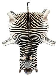 zebra skin rug south africa zebra hide rug exotic south zebra skin rugs for south