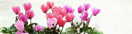 「秋の花」の画像検索結果