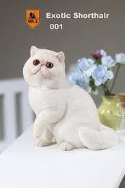 Exotic Shorthair Cat (White) - Machinegun