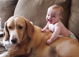 dogs and cats having babies. Exellent Cats Cute Cats And Dogs Love Babies Compilation 2015 To And Having