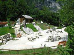 Campanula morettiana Botanic Garden | Parco Nazionale Dolomiti ...