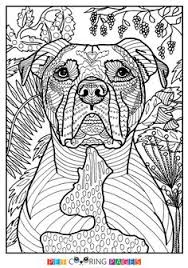 Small Picture Printable pit bull coloring page Free PDF download at http