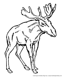 Small Picture Wild Animal Coloring Pages Young male moose Coloring Page and