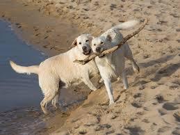 boatswain dog. boatswain point house rental dog o