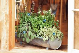 ideas for growing herbs in pots