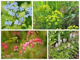 Small Picture How to design and plant a woodland garden Saga