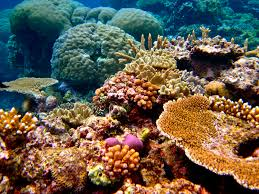 personal essay for education degrees education elementary resume the great barrier reef guest photo essay mapping megan