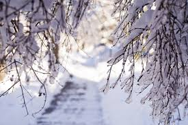 Snow Light Hd Winter Snow Branches Light Desktop Background Images
