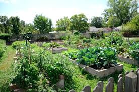 and they offer classes and whatnot to boot so yeah if you grow stuff to eat or look at you need to join kansas city community gardens