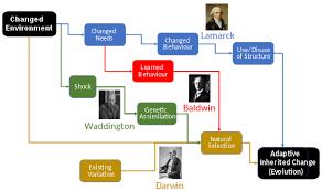 Lamarckism Wikipedia