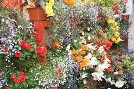 Small Picture Garden Design Courses Cork gardenxcyyxhcom