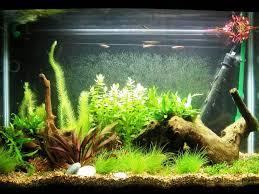 fish tank lighting ideas. Image Of: Fish Tank Decorations Ideas Lighting
