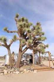 joshua tree acres