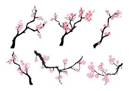 Pictures cherry blossom tree silhouette asian