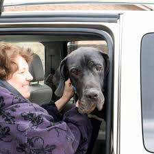 Mobile Mutts Rescue Transports - Home | Facebook
