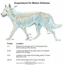 Canine Trigger Point Chart Animal Acupressure And Canine Acupressure Motion Sickness