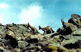 Животный мир Кыргызстана pictures of nature