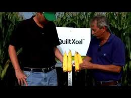 Quilt Xcel Fungicide Early (V-V8) for Stronger Stalks - YouTube & Quilt Xcel Fungicide Early (V-V8) for Stronger Stalks Adamdwight.com