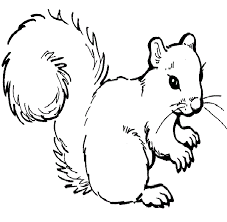 Small Picture Trend Squirrel Coloring Page 29 On Coloring for Kids with Squirrel