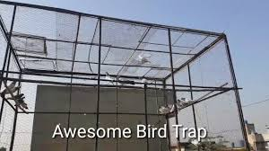 Bird Cage Trap Design Awesome Bird Trap Inside Cage Using A Drop Cage Trap